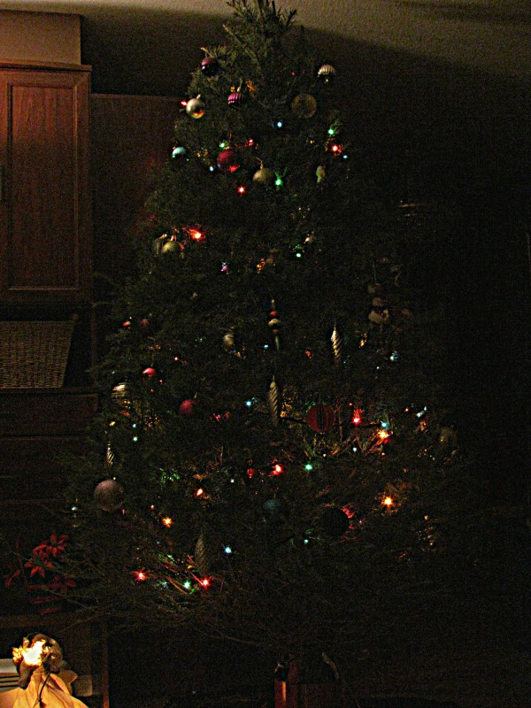 Christmas tree lit up