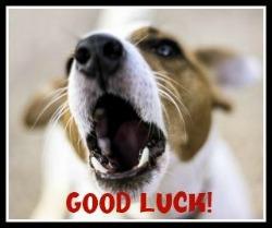 Dog-Good-Luck-button